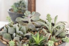 a large bowl with pebbles and succulents is a stylish piece with a modern feel – rock one