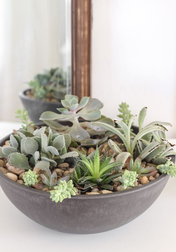 a large bowl with pebbles and succulents is a stylish piece with a modern feel   rock one