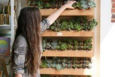 a large wooden succulent display shelf is a nice option for both indoors and outdoors, it looks modern and a bit rustic