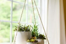 a suspended round shelf with succulents in pots and some greenery is a stylish idea for indoor succulent displaying