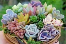 a vine wreath with colorful succulents and moss is a cute little decoration you may use anywhere