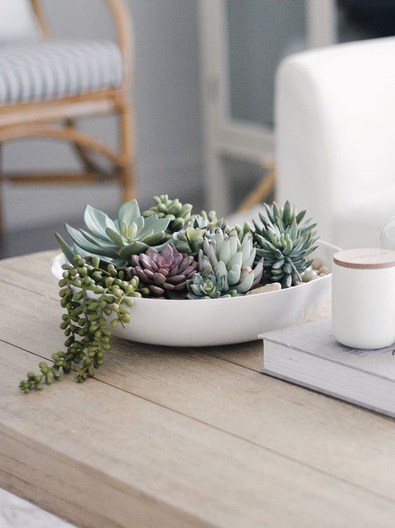 a white bowl with succulents of various colors is a stylish and sleek modern centerpiece or decoration