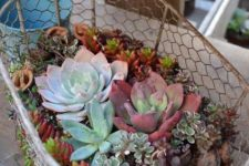 a wire planter with lots of succulents of various colors and textures is a stylish rustic idea for outdoors