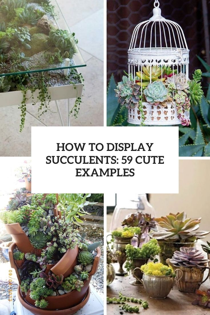 How To Display Succulents: 59 Cute Examples