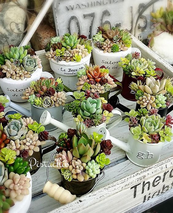 succulents planted into buckets and watering cans look cute and will bring a rustic feel to the space