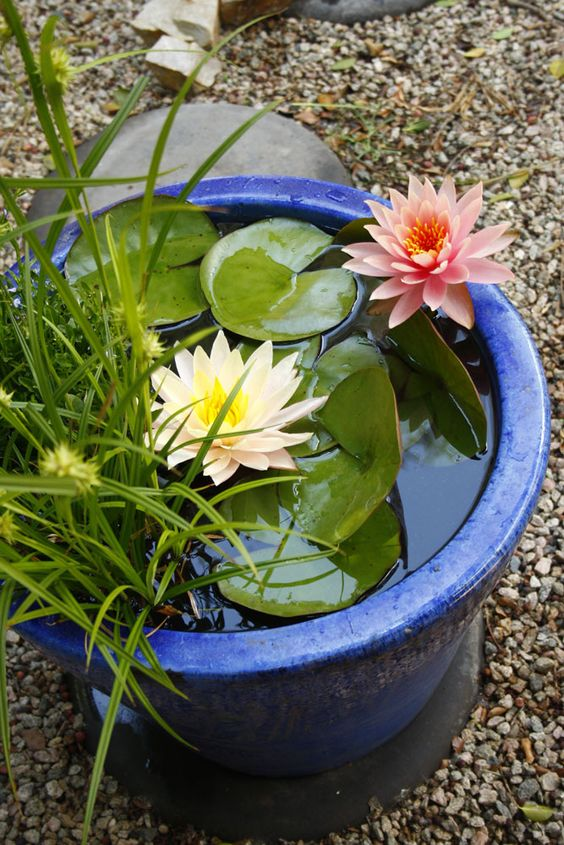 a bright mini water pond in bold blue, with water lilies and grasses will make an accent in your garden