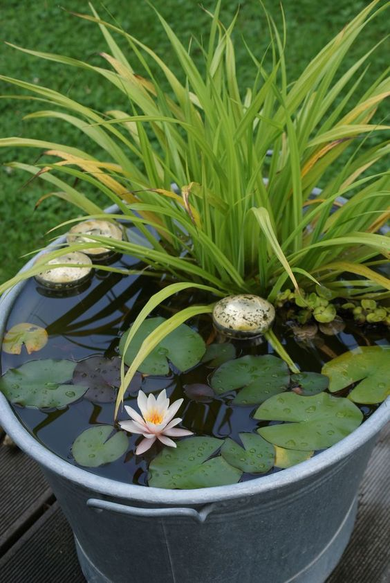 a galvanized container water garden with water lilies, rocks and greenery is a cool rustic idea