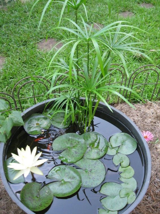 a mini outdoor pond with water lilies and greenery is a fresh natural decoration for any space