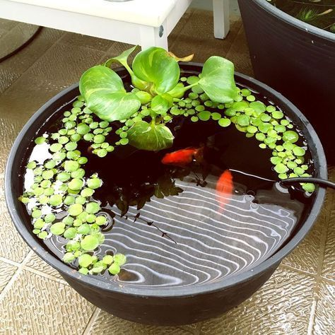 a small tank pond with greenery and a couple of koi fish is a cute and catchy decor idea to rock