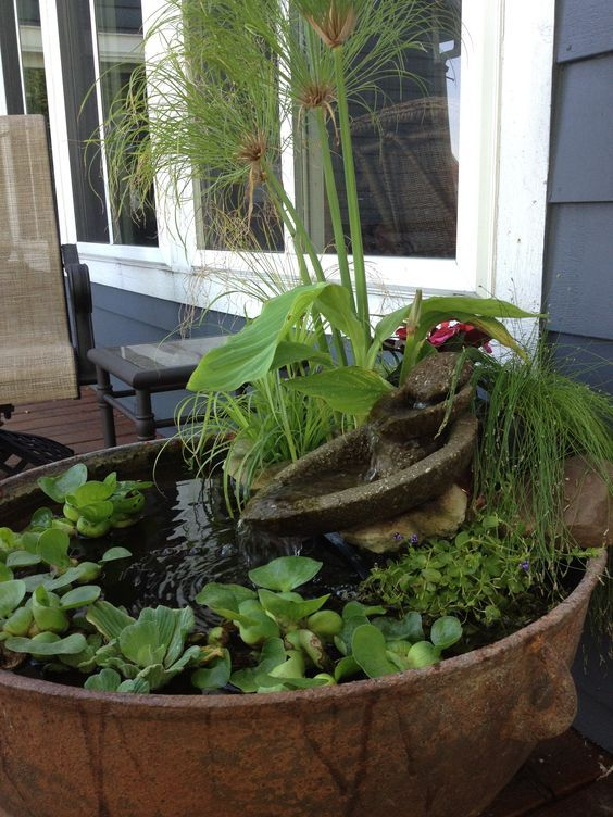 a stone bowl mini pond with floating greenery, a stone mini fountain and more water plants is lovely