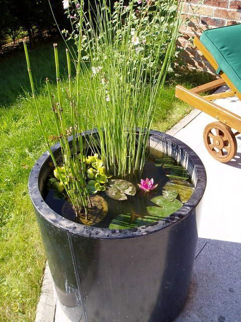 a tall ceramic vessel in black used as a containter pond with water lilies and other plants is great for a modern space