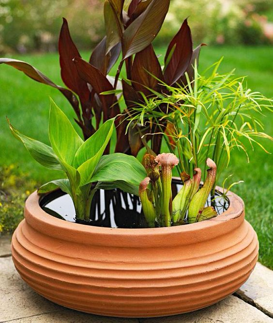 a terracotta pot as a water garden bowl with various plants is a very beautiful and chic decoration