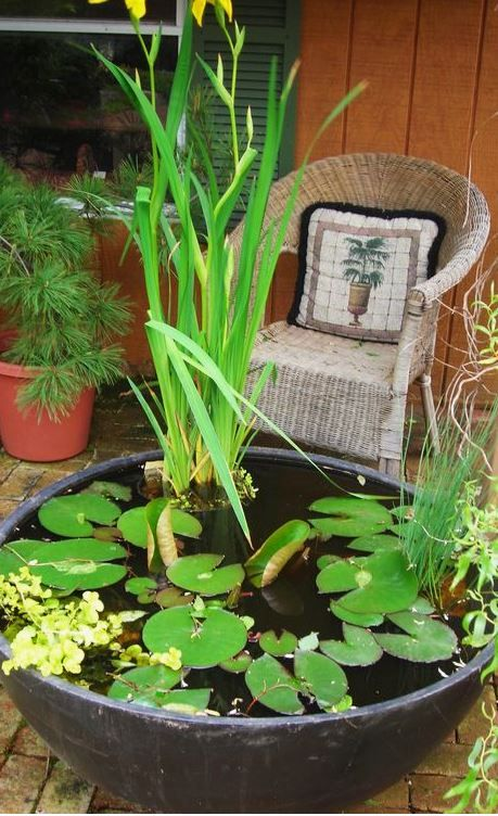 an oversized porcelain bowl as a backyard mini pond with several water plants is a beautiful outdoor decoration