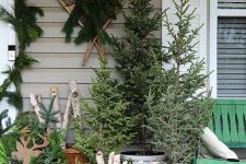 a cluster of non-decorated Christmas trees in buckets, a basket with firewood, buckets with fir branches and vintage skis