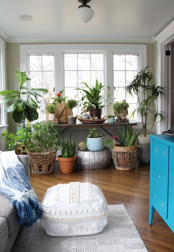 a small sunroom with a grey sofa, a colorful blanket, a bold blue sideboard, a large collection of potted statement plants