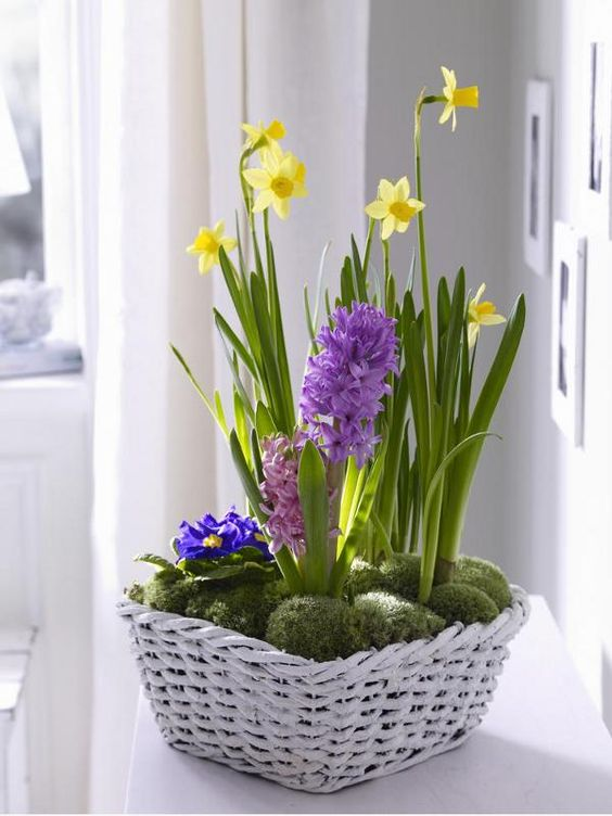 a white basket with moss, bright hyacinths and daffodils is a lovely rustic decoration for spring with much color