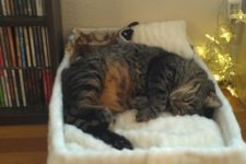 a cozy white plush cat bed with a pillow will make your furry friend super happy