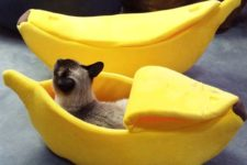 a fun and colorful banana cat bed with a lid is a creative idea with a touch of humor