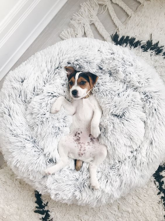 a round super soft dog bed of faux fur is a pretty idea that won't spoil your interior and will make your dog happy