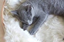 a simple nest-like cat bed with faux fur is a classic and chic idea for a contemporary or minimalist space