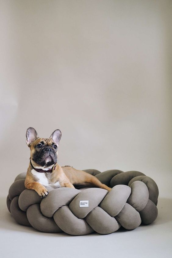 a stylish chunky woven dog bed is a pretty idea for a modern or minimalist interior and looks very cool and fresh
