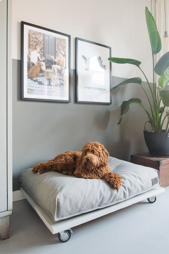 a stylish modern dog bed on casters with an oversized grey cushion is a lovely idea for a modern or contemporary space