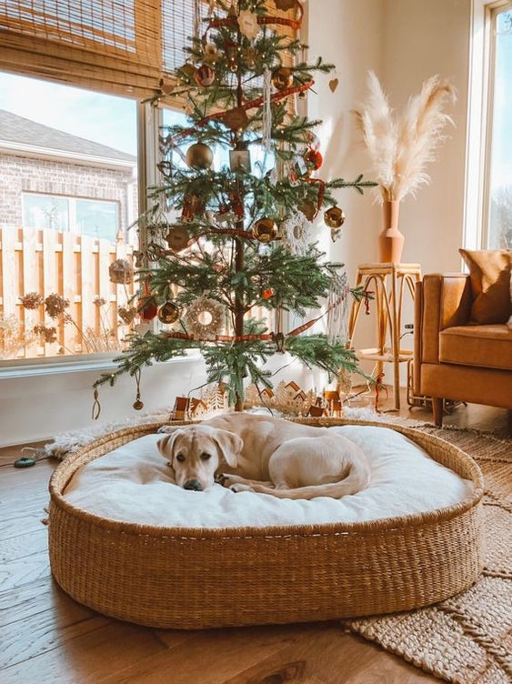a stylish woven basket dog bed with a large cushion is a lovely idea for a modern or farmhouse inerior