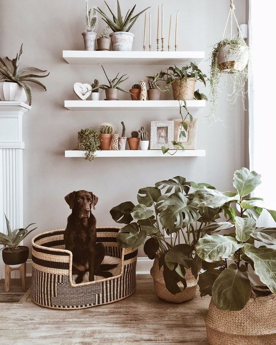 a woven printed dog bed will easily match your modern or boho space and will make an accent to it