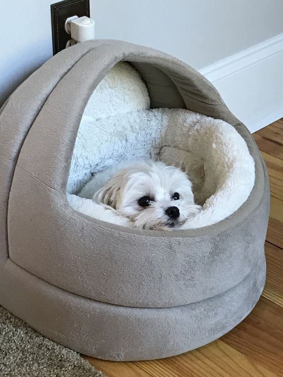 an all-soft dog bed with a neutral soft inner is ideal for a small dog and can be a very cool solution