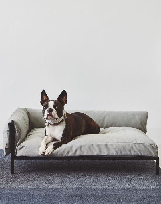 an ultra-modern dog bed styled as a modern human daybed and it will match your interior in the best way possible
