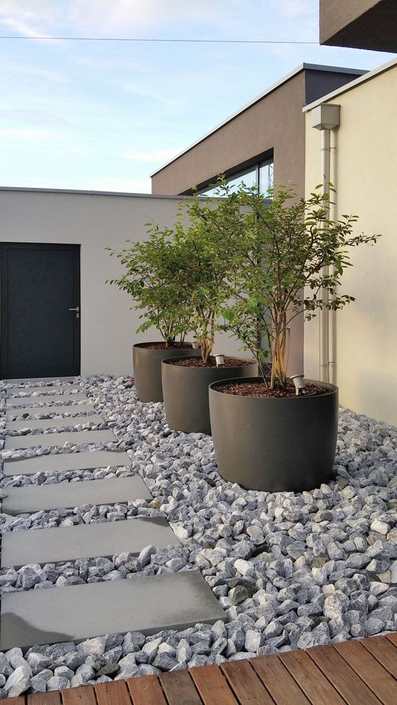 oversized black cup planters like these ones can accommodate a whole tree and give an edgy feel to the space