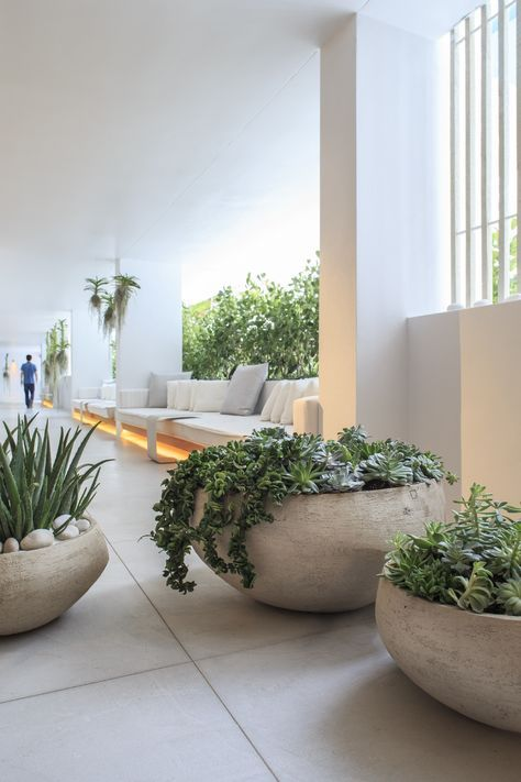 oversized concrete bowl planters with pebbles and greenery plus succulents for an ultra-modern and bold look