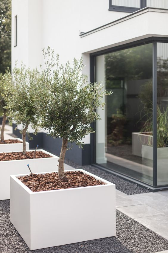 oversized white square concrete planters in a row will make your outdoor space very edgy and cool