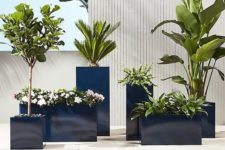 tall galvanized glossy navy planters of various sizes and heights with various plants and blooms look very stylish