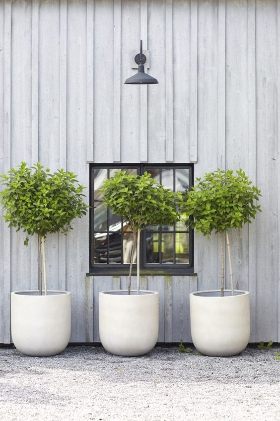 white concrete cup-like planters with trees are great not only for a modern space but also for a rustic one