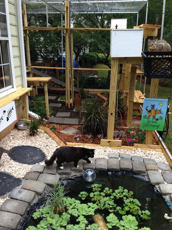a bright and fun cat enclosure with cat trees, a pond, some greeneyr and blooms and cat bowls