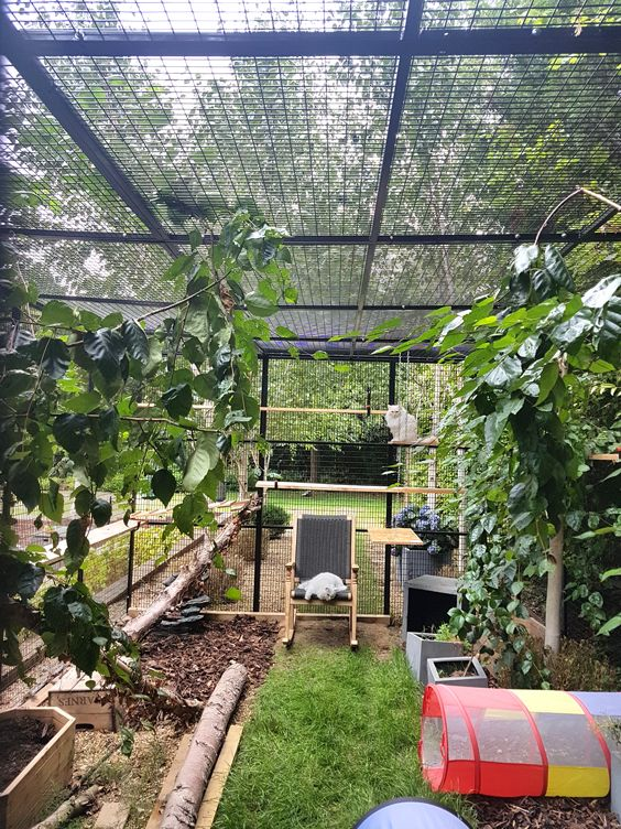 a large and natural catio with green lawn, some non-toxic plants, branches, a comfy chair and cat trees and beds