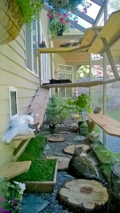 a large natural cat enclosure with shelves and beds, pebbles and wood slices, lots of herbs and blooms