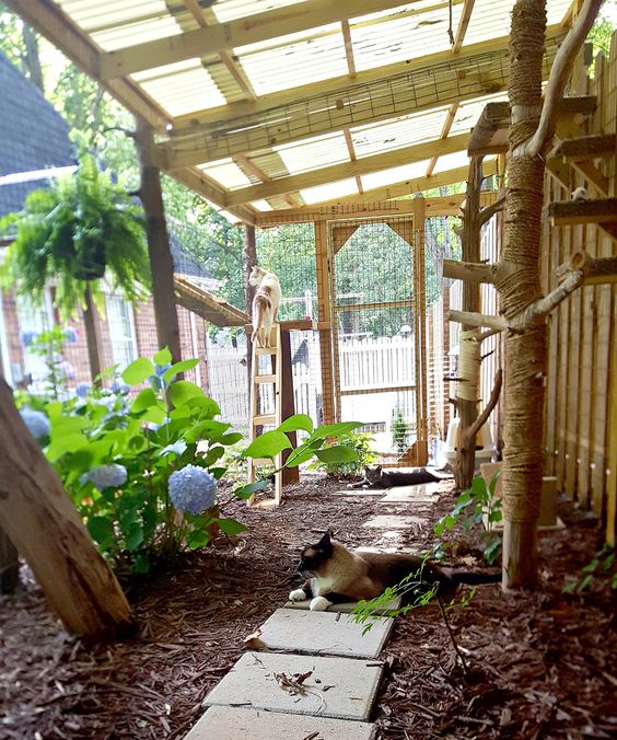 a large natural cat patio with lots of plants and trees, pavements, cat trees and beds plus toilets