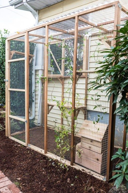 a natural cat enclosure with shelves at various levels and a small house is a very welcoming unit