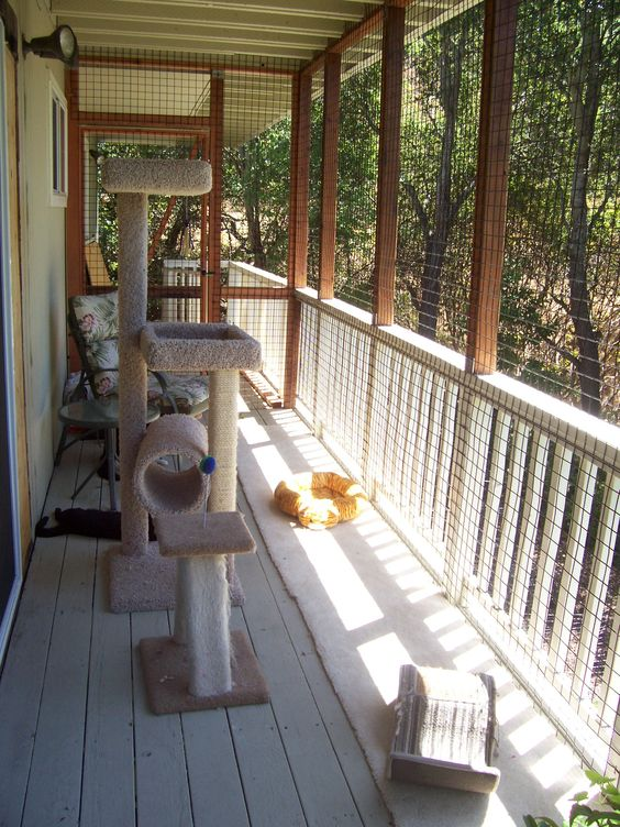 a screened porch as a cat patio with a large cat tree, some beds and some human furniture is very welcoming