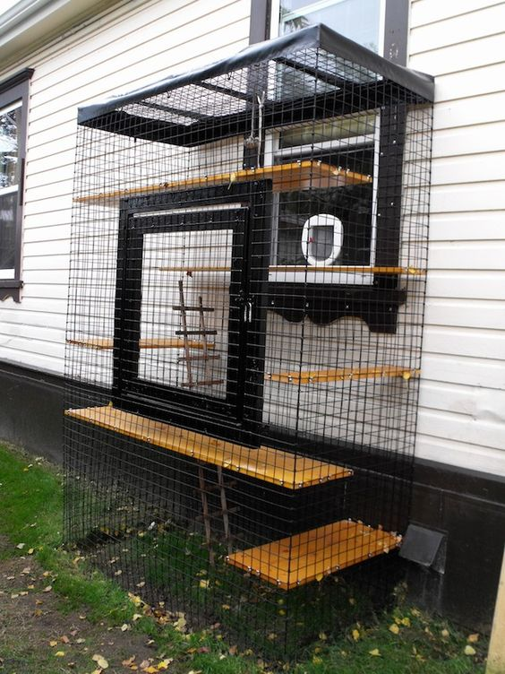 a simple cat patio with shelves at various levels and a ladder is attached to the wall
