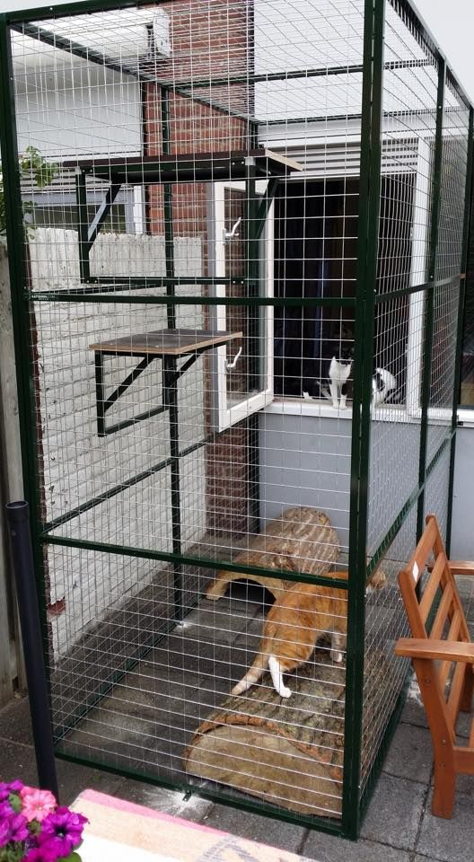 a simple modern cat patio with shelves and tree stumps is a small yet pleasant space to stay