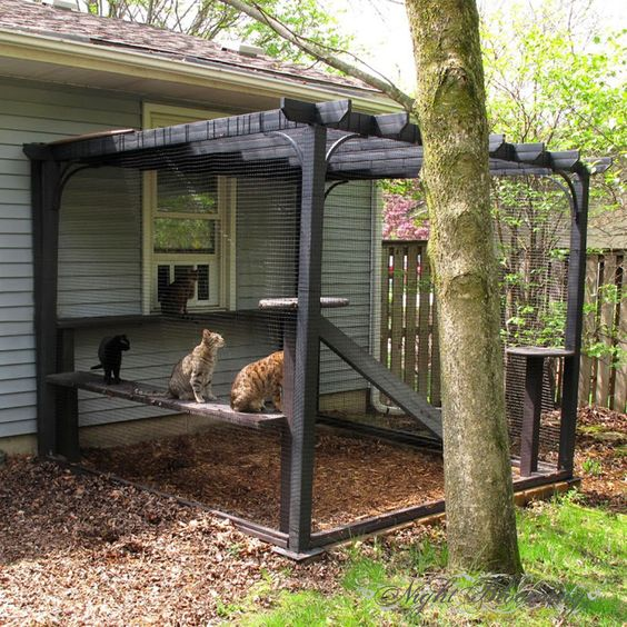 a simple rustic cat patio in black, with shelves, ladders and a scratcher is great for breathing fresh air
