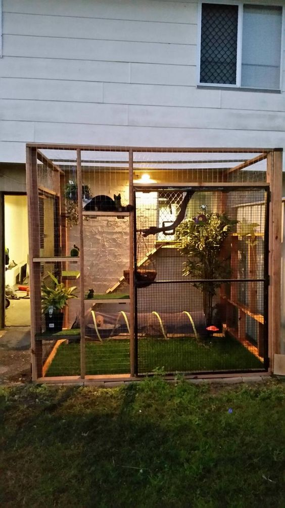 a simple yet cool cat patio with a green lawn, some potted plants, shelves, cat trees and a cat tunnel