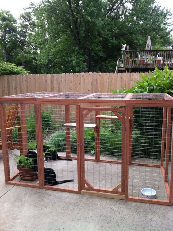 a small cat cage with shelves, a water bowl and cat herbs in a planter won't take much space