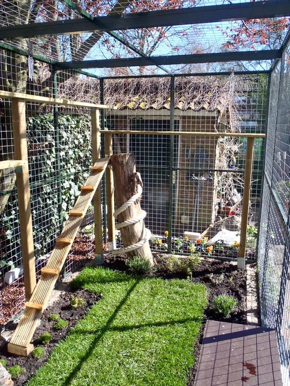 a small yet cozy cat enclosure with a green lawn, some cat herbs growing, ladders and a scratacher and a deck