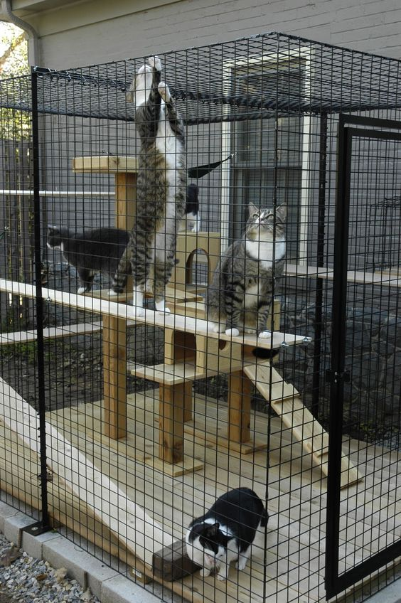 a stylish modern cat enclosure with a deck, a large wooden cat tree and shelves and a hammock