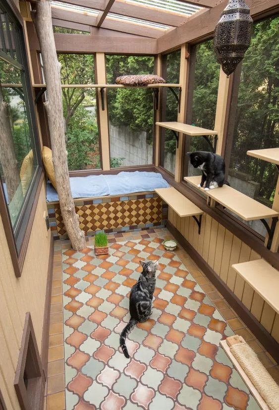 large cat and human enclosure with a daybed, some shelves and cat beds, a tree, some bowls and herbs