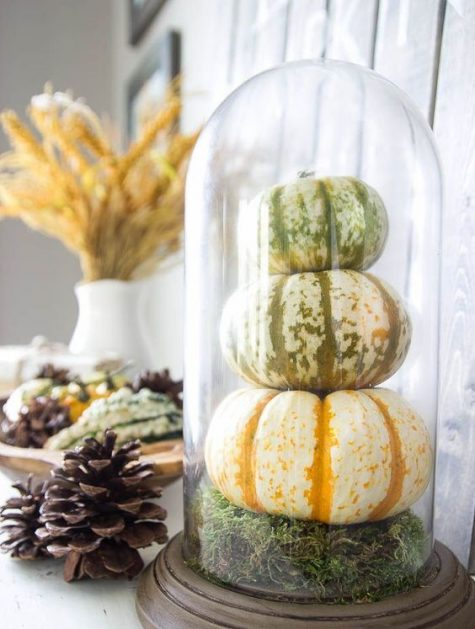a rustic cloche display with moss and natural pumpkins is ideal for the fall